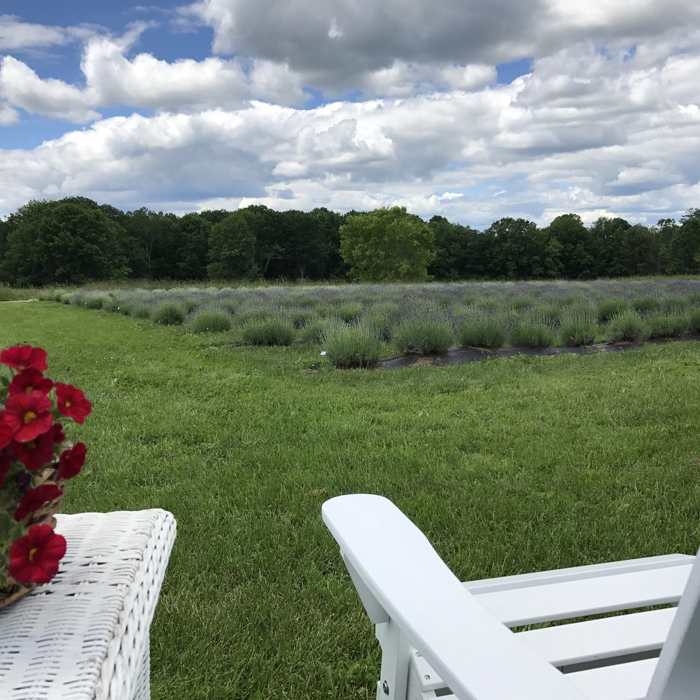 Relax at our lavender farm