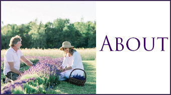 about our lavender farm in maine